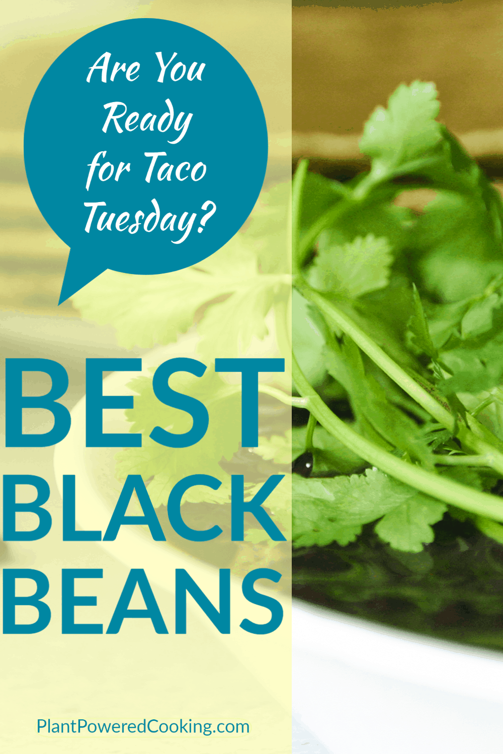 """Close-up unfocused shot of best black beans with cilantro and text overlay that reads """"Are you ready for Taco Tuesday?"""""""